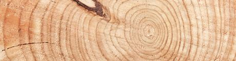 Cernes de bois